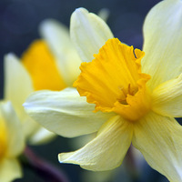 Végre itt a tavasz!