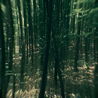 Képek egy misztikus erdőből