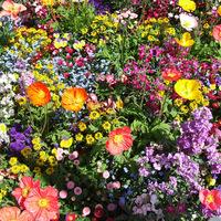Nyári hangulat: tarka virágok