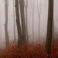 Ködös őszi erdő