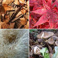 Közeledik az ősz...