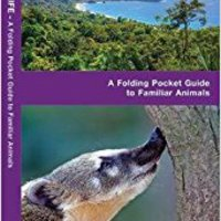 _TOP_ Costa Rica Wildlife: A Folding Pocket Guide To Familiar Species (A Pocket Naturalist Guide). along English tonight Sonic vuelos event Check located