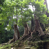 Angkor Wat békái