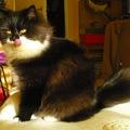Közeledik a karácsony, híznak a macskuszok...