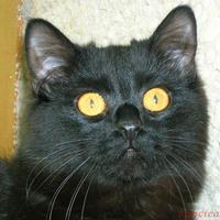 Azok a csodás sárga szemek!!!