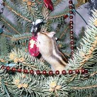 Karácsony - szilveszter - újév