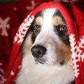 Tippek, hogy legyen biztonságos a karácsony kisállattal