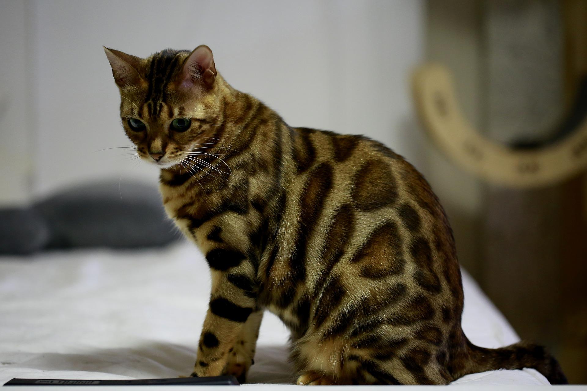 Macskaallergiában szenvedsz, de szeretnél cicát tartani?