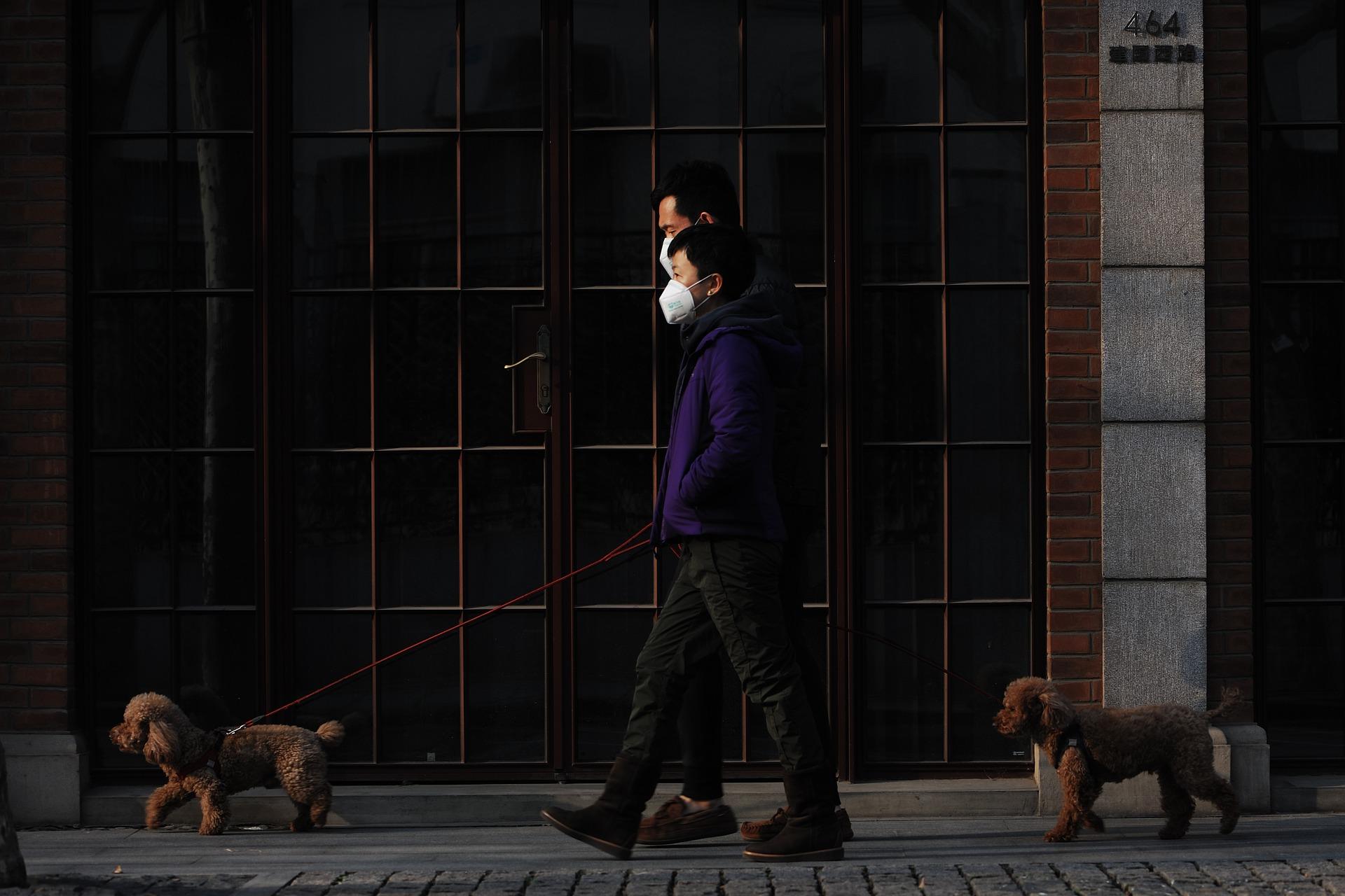 Így sétáltasd a kutyádat kijárási tilalom idején!