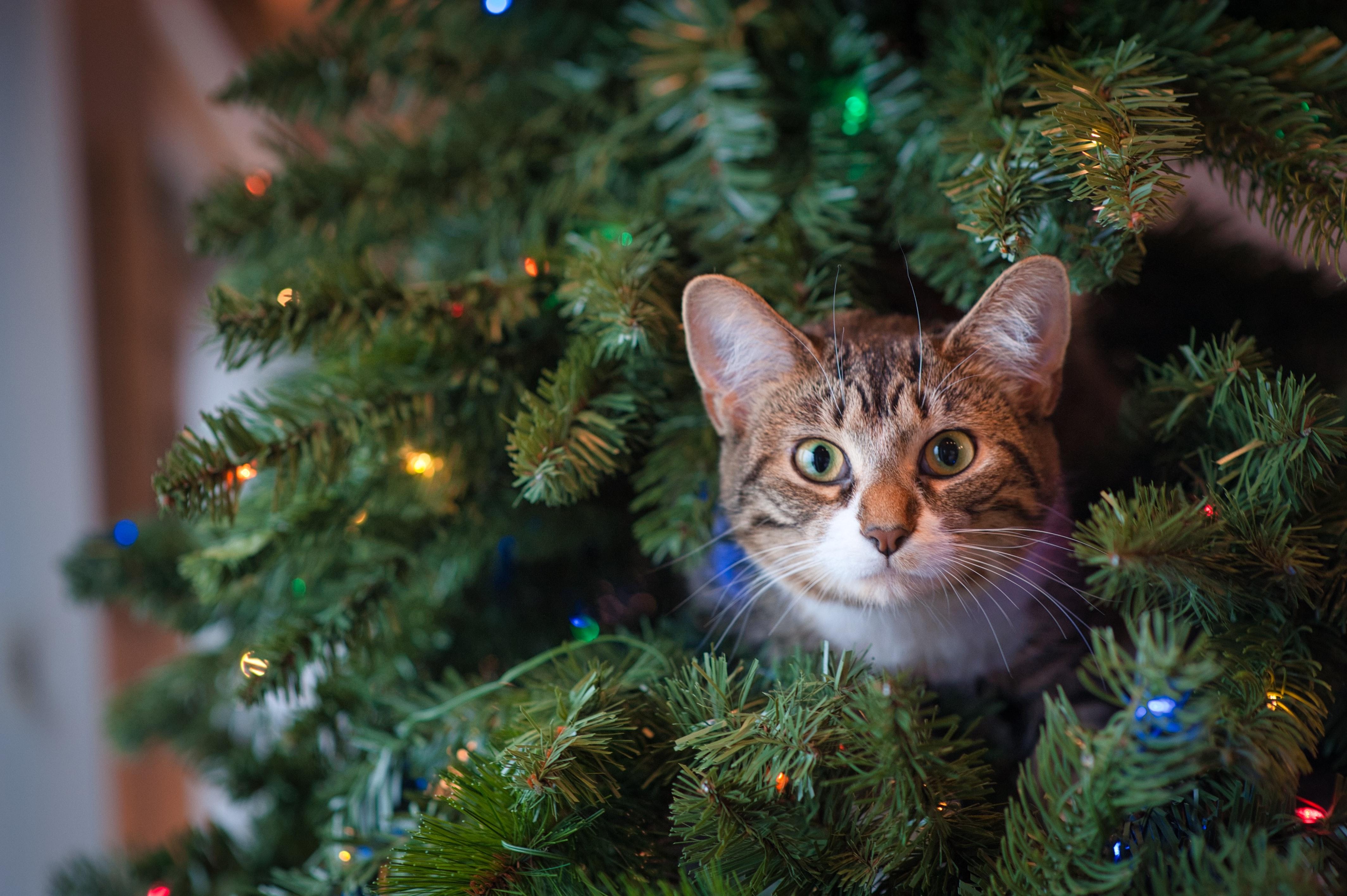 Macskabiztos karácsonyfa - létezik ilyen?