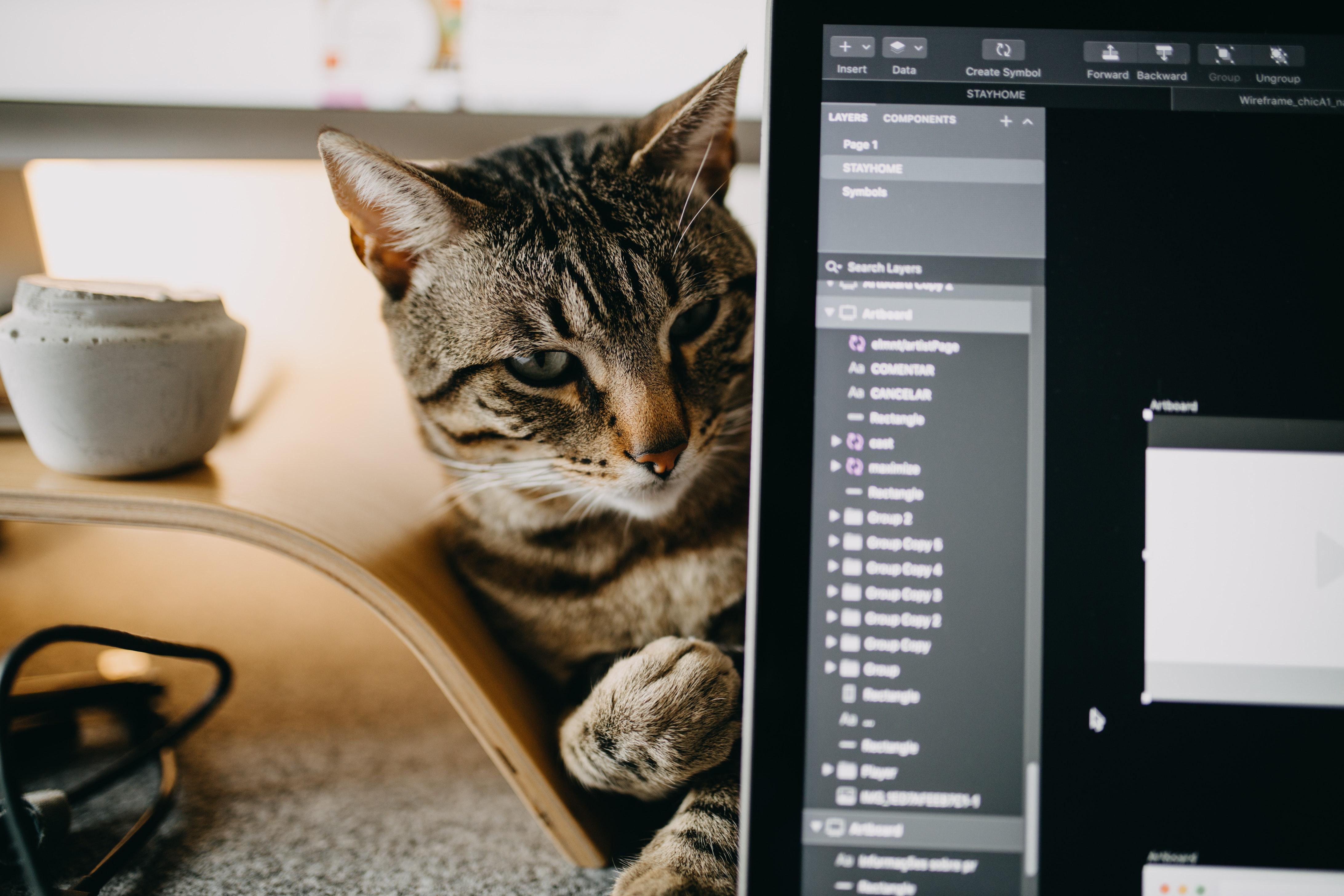 3 tipp, hogy dolgozz otthon hatékonyan szeretetéhes cicáddal