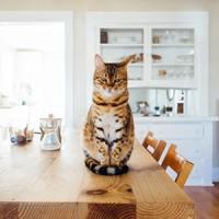 Hogyan tartsunk háziállatot társasházban?