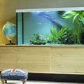 Bevezetés az akvarisztika csodálatos világába