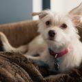 Így vigyázz a kutyusodra, hogy ne essen baja szilveszterkor!