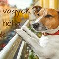 9 tipp a szomszédban folyton ugató kutya esetére