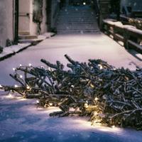 Hogyan távolítsuk el a fenyőfát tűlevelek nélkül az otthonunkból?