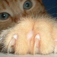 3+1 macskajaj, amihez még innod sem kell - avagy macskák a szomszédban