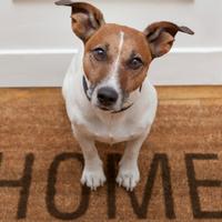 Kutyát tartani panelban. Jó vagy rossz ötlet?