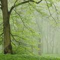 Ha meghalok, tölgyfaként fogok újjászületni...