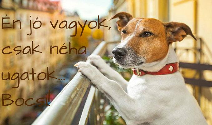 ugato_szomszed_kutya.jpg