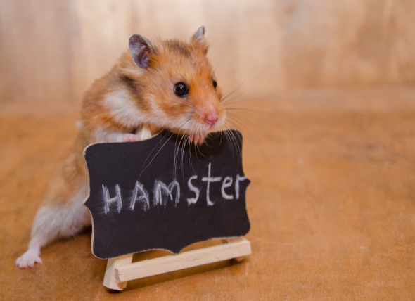 cans_hamstersign_729603697_1.jpg