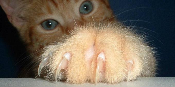 macska_a_szomszedbol.jpg