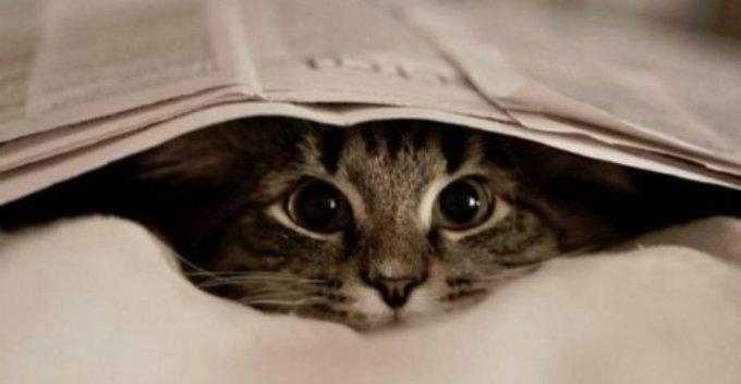 macska_zavaro_szagok.jpg