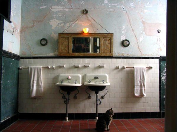 új fürdő macskával.jpg