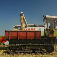 Újabb indok, a magyar rizs fogyasztása mellet