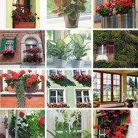 Ablakdíszítés (növényekkel)