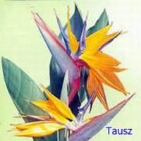 Papagájvirág (gondozása)