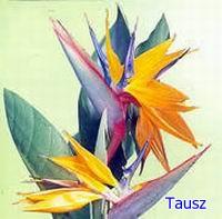 papagajvirag50_1.jpg