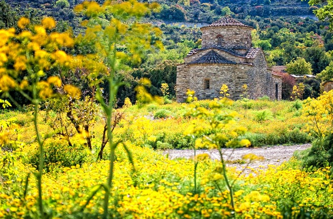 9-wildflowers---cyprus.jpg