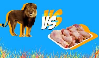 Tényleg erkölcstelenebb csirkét enni mint amerikaiként lelőni egy oroszlánt Afrikában?