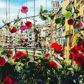 Tavasszal egy hétre virágba borul Girona