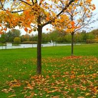 A tatabányai Csónakázó-tó és parkja őszi színekben :)