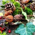 Karácsonyi dekoráció erdei anyagokból!