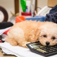 4 dolog, amit a kutyádtól tanulhatsz
