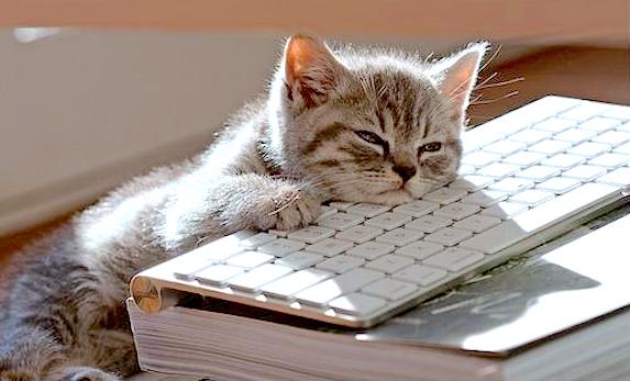 bored-bpo-cat.png