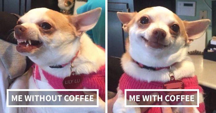 funny-coffee-tweets-fb9_700-png.jpg