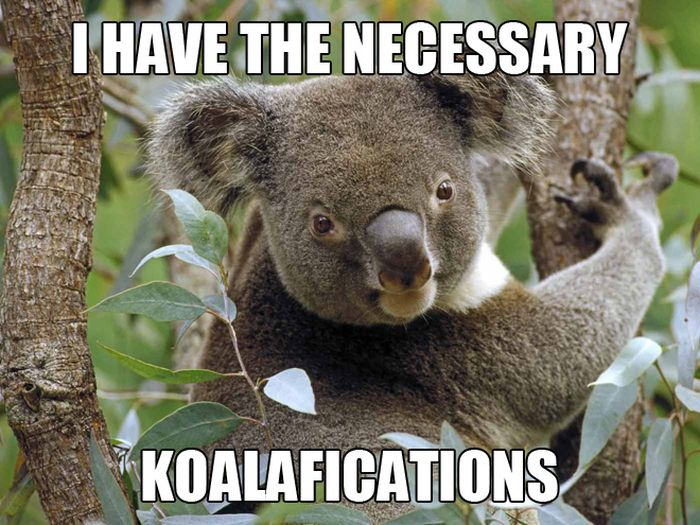 koalafications.jpg