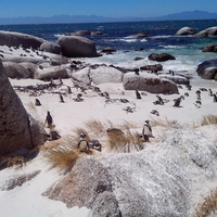 Valahol messze délen - Két hét Dél-Afrikában