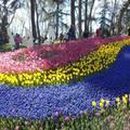 Tavaszköszöntő tulipánfesztivál Isztambulban