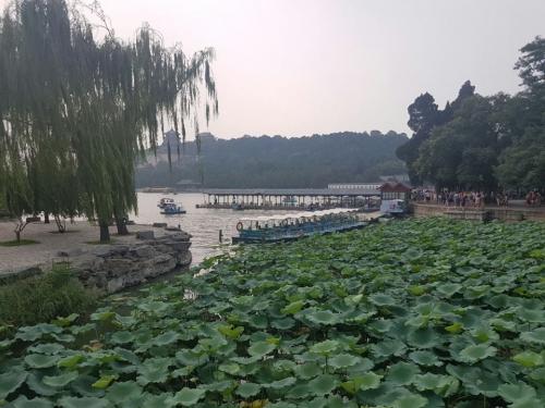 Peking (Fotó: Pataki Niki)