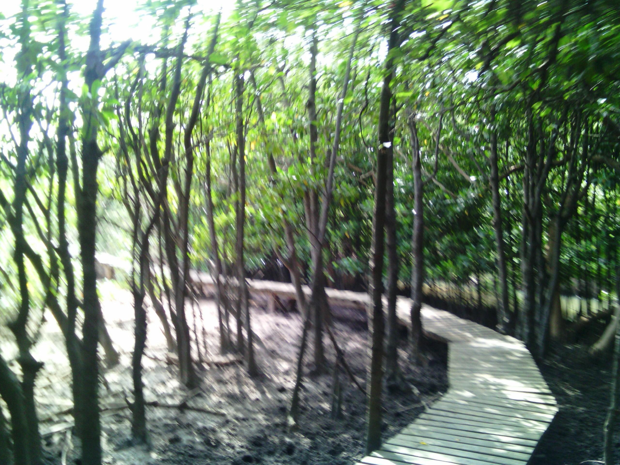 Durban, mangrove (Fotó: Szabó Ági)