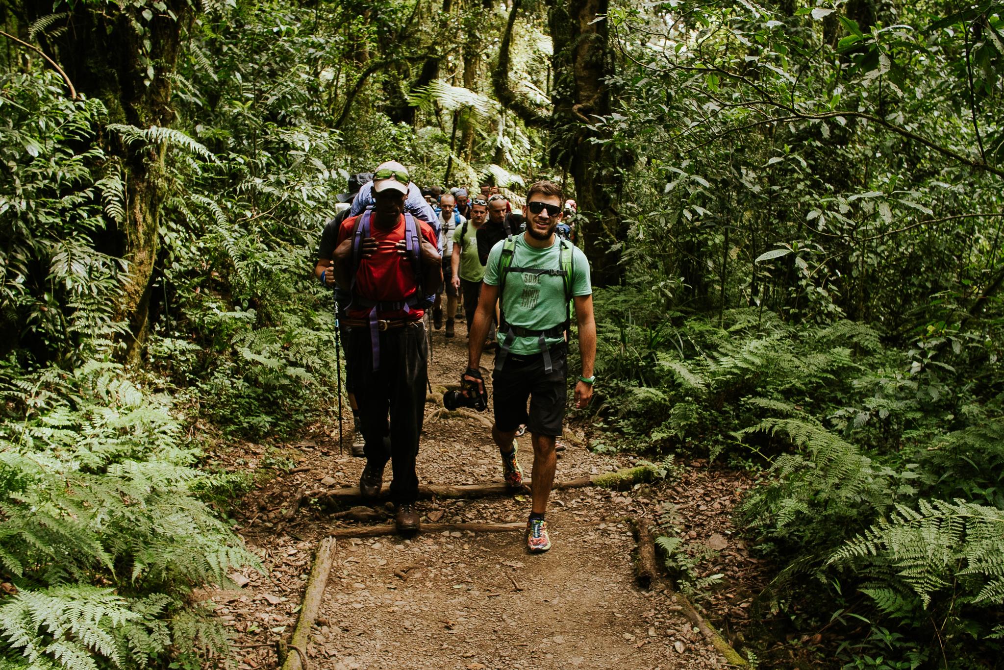 Felfele a Kilimandzsáró dzsungelében. (Fotó: Józsa Levi)