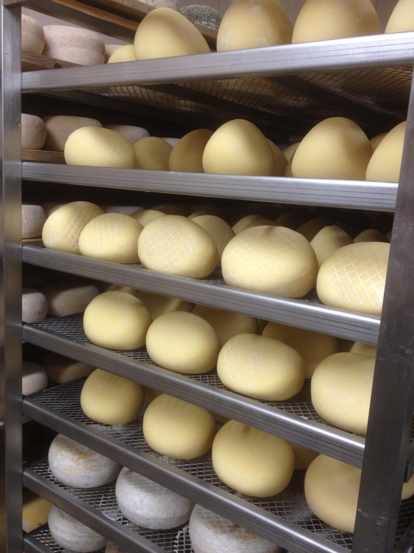 A hűtőszobában érnek a jó kis sajtok (Fotó: Nyitrai Réka Viktória)