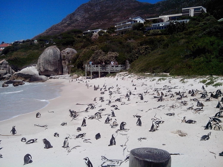 pingvinek2kata.jpg