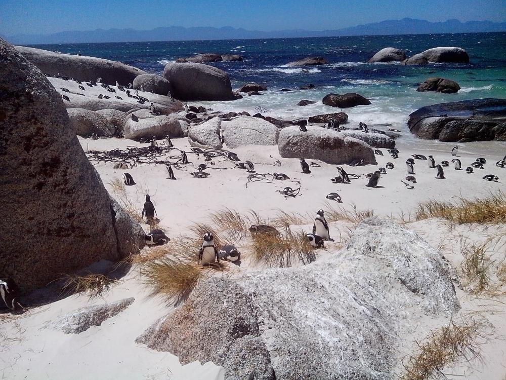 pingvinekkata_1.jpg