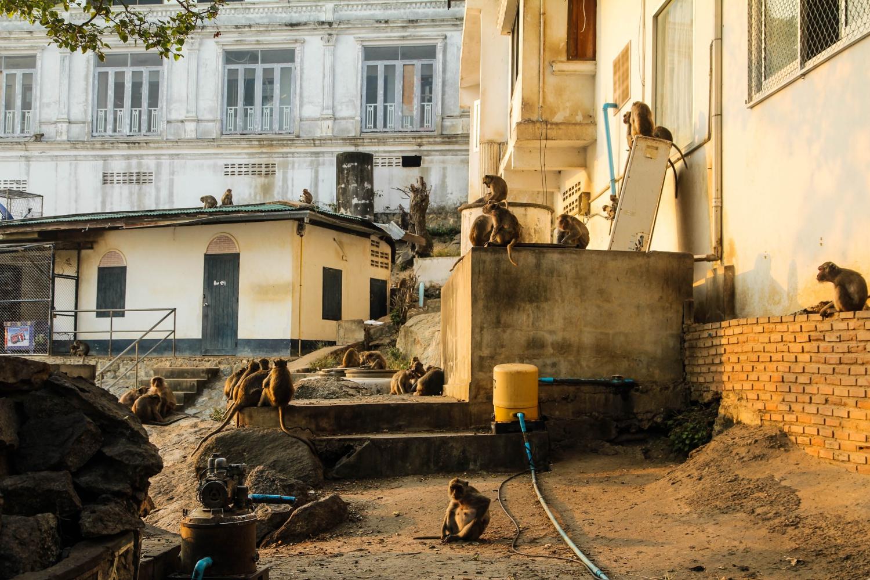 A majmok néhol egészen közel élnek a lakóházakhoz – ilyenkor aztán minden ajtóra és ablakra kötelező a rács. - (Fotó: The Epic Gust)